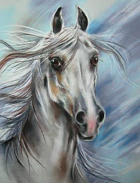 """""""Portret siwego ogiera"""", rysunek pastel, konie"""